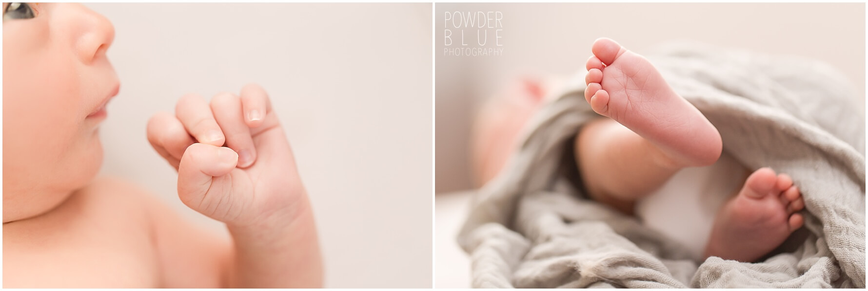 newbotn photography session for a newborn in pittsburgh pa and a dog